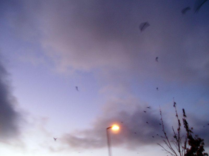 Crows-in-flight